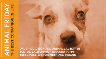 Drug Addicted Dog