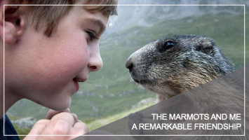 Marmot Walch